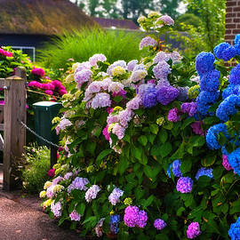 Jenny Rainbow - Colorful Hydrangea at the Gate. Giethoorn. Netherlands