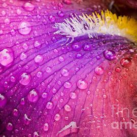 Oscar Gutierrez - Colorful iris