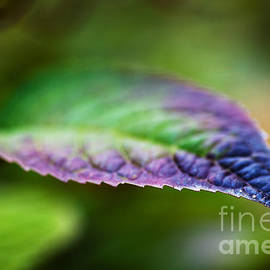 Andrea Gingerich - Colorful Leaf
