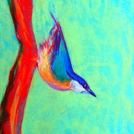 Sue Jacobi - Colorful Nuthatch Bird