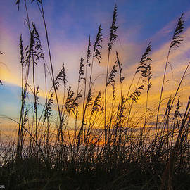 Island Sunrise and Sunsets Pieter Jordaan - Colorful Sea Wheat