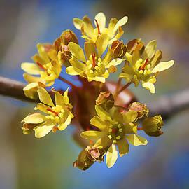 Milena Ilieva - Colorful Spring Beauty