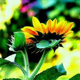 Karen  Majkrzak - Colorful Sunflower