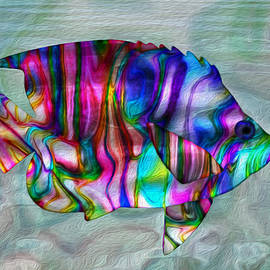 Jack Zulli - Colorful Tropical Fish