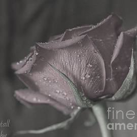 Tracy  Hall - Colorless Rose