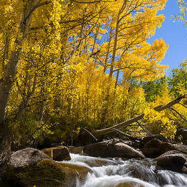 Joe Doherty - Colors and the cascades of South Fork Bishop Creek