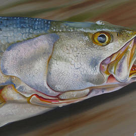 Phyllis Beiser - Colors Of A Trout