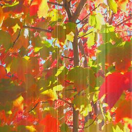 Brooks Garten Hauschild - Fall is in the Air