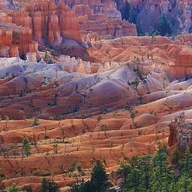Bruce Bley - Colors of Bryce Canyon