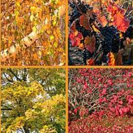 Carol Groenen - Colors of Fall Collage