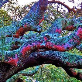 Chuck  Hicks - Colors On An Oak