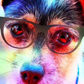 Naomi Burgess - Colourful Dog In Glasses
