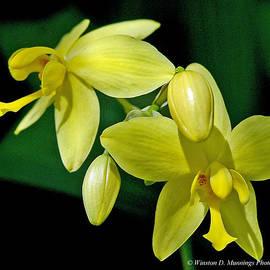 Winston D Munnings - Common Ground Orchid