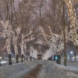 Joann Vitali - Commonwealth Ave Mall - Boston