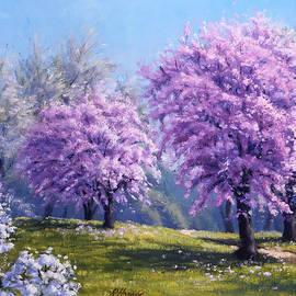 Rick Hansen - Como Park Blossoms