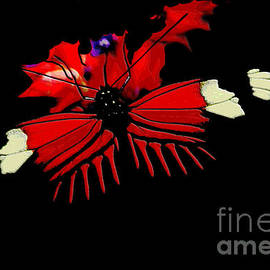 Denise Woldring - Butterfly Silhouette
