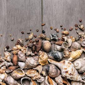 Carlos Caetano - Conchs and Shells