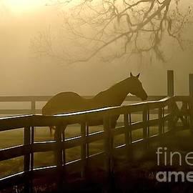 Scott Hansen - Coosaw Early Morning Mist