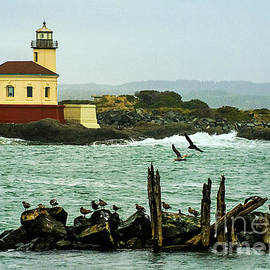 Priscilla Burgers - Coquille River Lighthouse and Birds