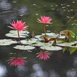 Suzanne Gaff - Coral Lotus Blossoms with Frog