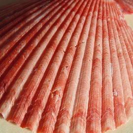 Dotti Hannum - Coral Shell