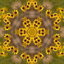 Kathy Clark - Coreopsis - Dancing Alabama Wildflower Kaleidoscope