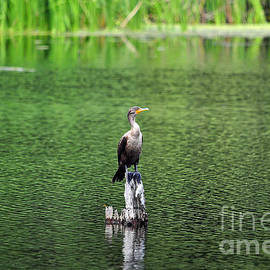 Al Powell Photography USA - Cormorant Chilling