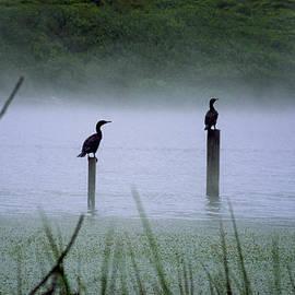 Art Shimamura - Cormorants