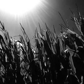 Edward Paul - Corn Maze 02BW