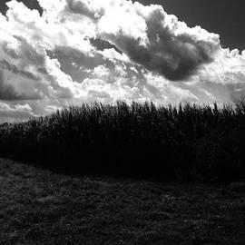 Edward Paul - Corn Maze 03BW