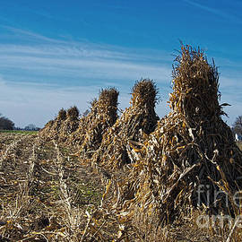 David Arment - Corn Shocks at October Harvest