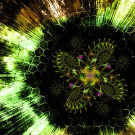 Shawn Dall - Cosmic Solar Flower Fern Flare