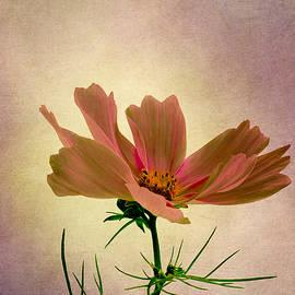 Robert Murray - Cosmos - Flower of Love
