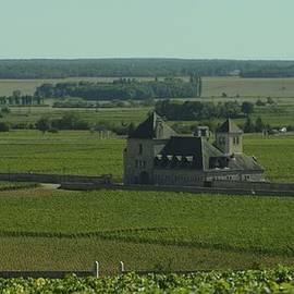 Cote De Nuits Vineyard 1.9