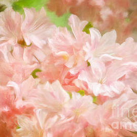 Lois Bryan - Cotton Candy Pink Azaleas