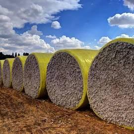 Meir  Jacob - Cotton Harvest