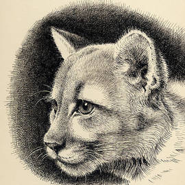 Mamoun Sakkal - Cougar
