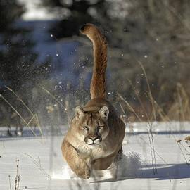 Wildlife Fine Art - Countdown