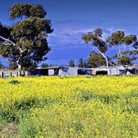 Damian Morphou - Country Australia
