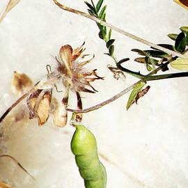 Pamela Patch - County Botanicals