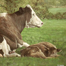 Martin Davey - Cow And Calf In Field