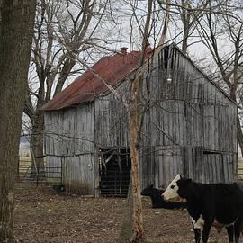 Dwight Cook - Cow barn