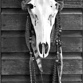 Karon Melillo DeVega - Cow Elk Skull and Feathers