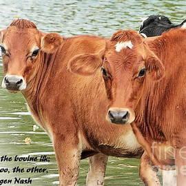 Marcel  J Goetz  Sr - Cow Poem