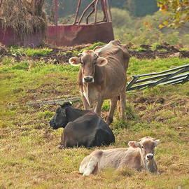 Marcel  J Goetz  Sr - Cows in the Afternoon