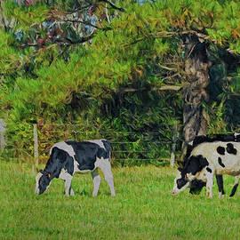 Sandi OReilly - Cows Grazing