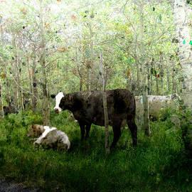 James Huntley - Cows