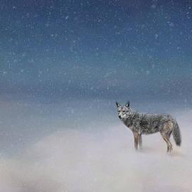 Jai Johnson - Coyote In Winter