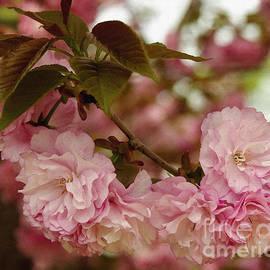 James C Thomas - Crab Apple Blossoms