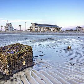 Joan McCool - Crab Trap Washed Ashore